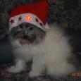 дизайнерская порода по доступной цене (собака), Новосибирск