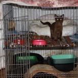 Клетка трансформер для животных 91*91, Новосибирск