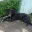 большой выбор собак (приют), Новосибирск