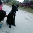 отдам собаку дворняжечку, Новосибирск