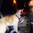 отдается нереальный, крутой пацан 4,5 месяцев (собака), Новосибирск