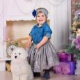 Новогодние детки  Бишон Фризе!, Новосибирск