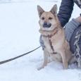 Дина озарница (собака), Новосибирск