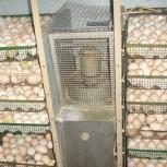 Мясо домашних птиц, яйцо домашнее, Новосибирск