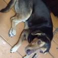Знакомьтесь, это Рич - богатый душой и сердцем пес!, Новосибирск