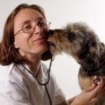 ветеринарный врач , услуги, Новосибирск