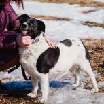 Собачка-малышка Дина – отличная охранница и компаньон!, Новосибирск