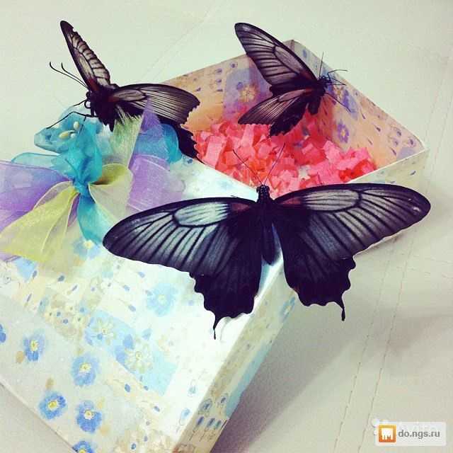 Бабочки как подарок 14