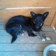 отдам мелкую собачку, Новосибирск