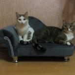 диванчики для кошек и собак, Новосибирск
