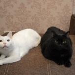 Вынужденно ищем дом любимцам семьи - коту и кошке!, Новосибирск