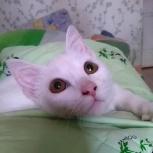 Кошка Долька счастья  4-5 месяцев, Новосибирск