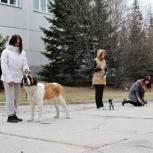 Общий курс послушания и ринговая дрессировка собак., Новосибирск