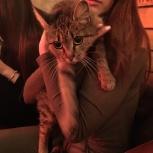 Найдена молодая кошечка, Новосибирск