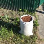 Скорлупа кедрового ореха, Новосибирск