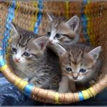 Маленькие котятки в добрые ручки!, Новосибирск