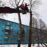 Спил дерева снос обрезка вырубка деревьев, Новосибирск