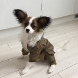 Одежда для собак. Зимний комбинезон, Новосибирск