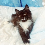 Милейшие котята даром, Новосибирск