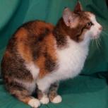 Героическая кошка Юлька, Новосибирск