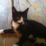 Котенок,мальчик 3 месяца, Новосибирск