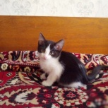 Милые котятки 4 мес. (на фото 2 мес), Новосибирск