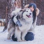 Домашняя передержка для собак, Новосибирск