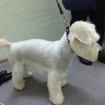 Стрижка и уход за вашей собачкой, одежда, Новосибирск