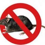 Дератизация (крысы, мыши), Новосибирск