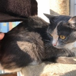 Нашли кошечку, молодая красавица, Новосибирск
