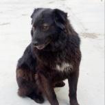 Молоденькая собачка девочка( как ночка )., Новосибирск