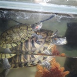 Аквариум и черепахи, Новосибирск