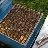 Куплю пчел , ульи, Новосибирск