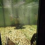 Продам аквариум с тумбой, Новосибирск