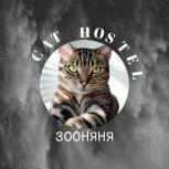 Зоогостиница для кошек, Новосибирск