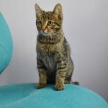 Полосатый котёнок Алан, 5 мес, Новосибирск
