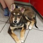 31 декабря потерялась собака, 4-5 месяцев!, Новосибирск