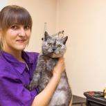 Стрижка кошек и собак в салоне и на домуdy, Новосибирск