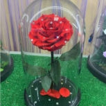 Живая роза в колбе, Новосибирск