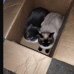 Найдены кошки, Новосибирск