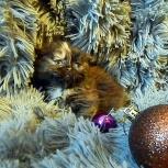 Домовенок с печальными глазами, котенок, Новосибирск