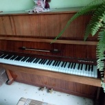 пианино, Новосибирск