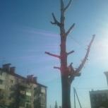 Снос, спил деревьев, валка, услуги автовышки, аренда, Новосибирск