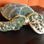 Большая зеленая черепаха, Новосибирск