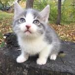 Маленький котенок 1,5 месяца -пацанчик, Новосибирск
