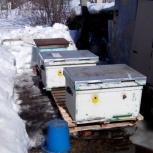 Пчелосемьи, Новосибирск