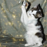 Милые котята-девочки, Новосибирск