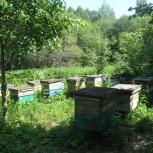 Пчелопакеты, пчелосемьи (Рамки на 230 Рут), Новосибирск