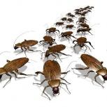 Травка тараканов и клопов, Новосибирск