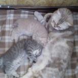 Котята Фунтик и Пушик ищут дом, Новосибирск
